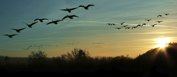 Bird Migration at Sunset